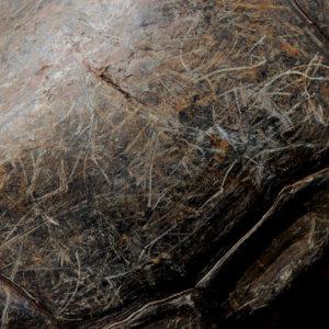 Giant Tortoise 3. Galapagos. 2007.