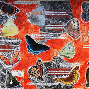 Fieldbook 25. Cary Center For Ecosystem Studies. Butterflies And Moths. 2015.