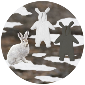 Onesies For Arctic Hares, (Lepus Arcticus), 2018. Mixed Media Collage Printed On Dibond,12 In. (30.5 Cm)